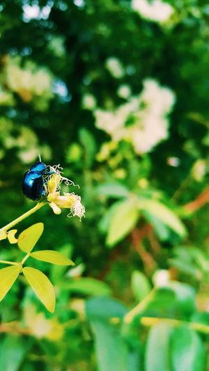 blue Bugs Bugs Life Green Nature EyeEm Nature Lover Eyeem Philippines Eyeem Bug