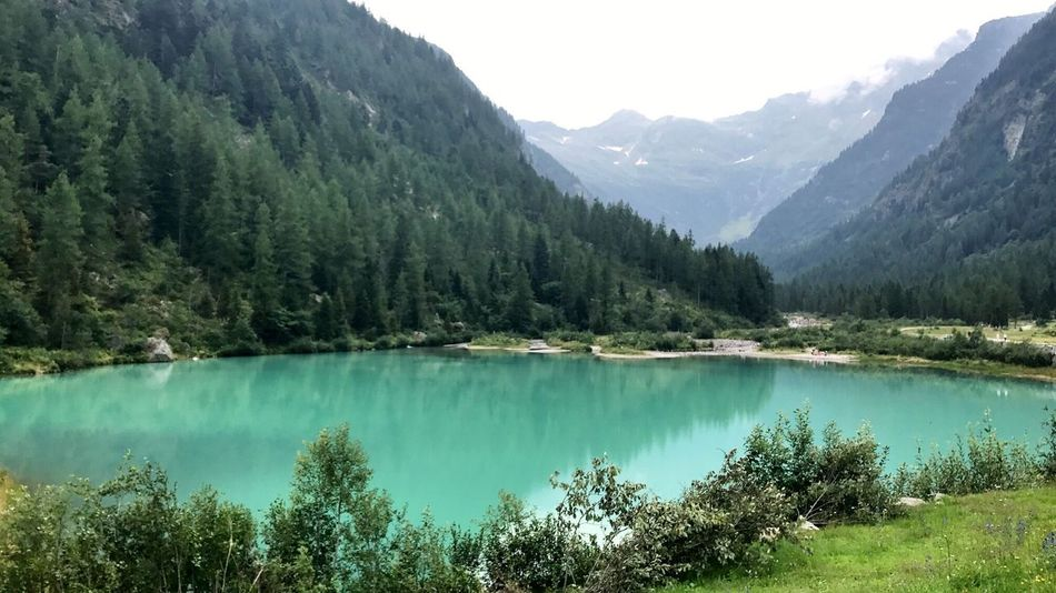 Lago della fate, Monte Rosa area Italy Mountain Tree Scenics Nature Tranquil Scene Beauty In Nature Lake Mountain Range Tranquility Idyllic Water Outdoors Pine Tree Lago Della Fate Landscape No People Pinaceae Green Color Day Travel Destinations Investing In Quality Of Life EyeEmNewHere Breathing Space Italy Monte Rosa The Week On EyeEm Your Ticket To Europe The Great Outdoors - 2018 EyeEm Awards