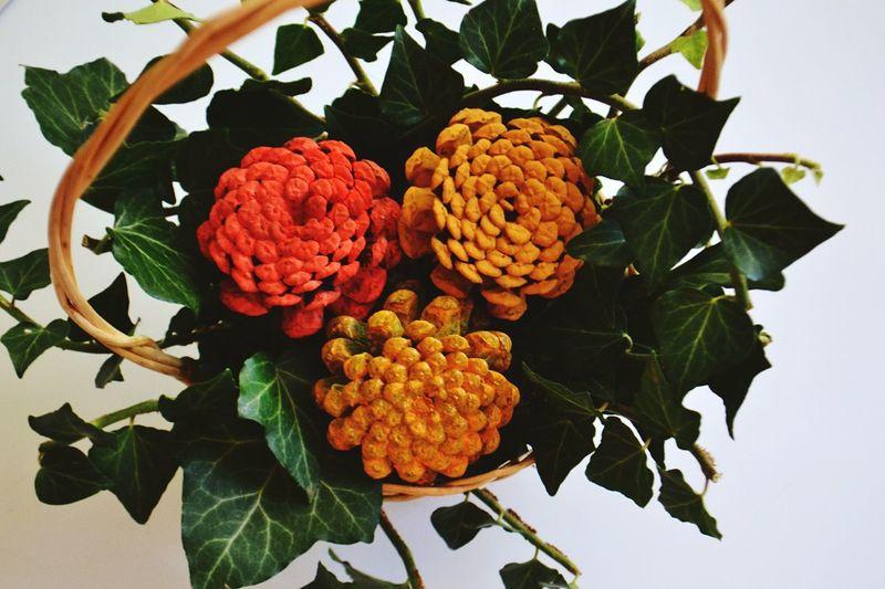 Close-up of multi colored pine cones