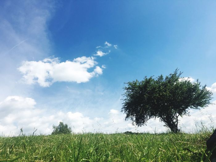 Sky Plant Cloud - Sky Growth Beauty In Nature Tree Nature Tranquility Field Tranquil Scene Day Blue No People Land Low Angle View Scenics - Nature Grass Outdoors Green Color Landscape