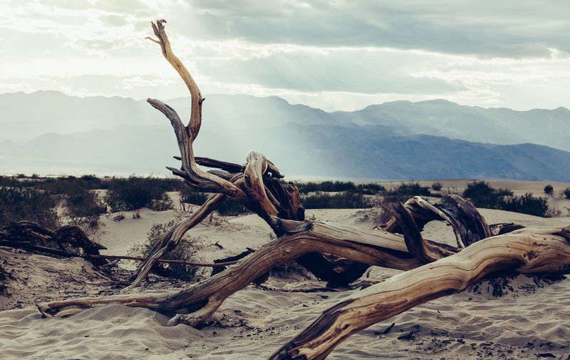 Driftwood On Tree By Mountain Against Sky