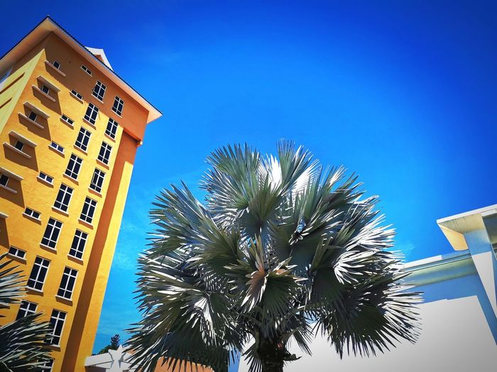 Low angle view of palm tree and building against blue sky