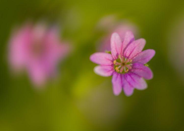 Flowers Macro! Flowers Macro Nikon Nature Pink Art