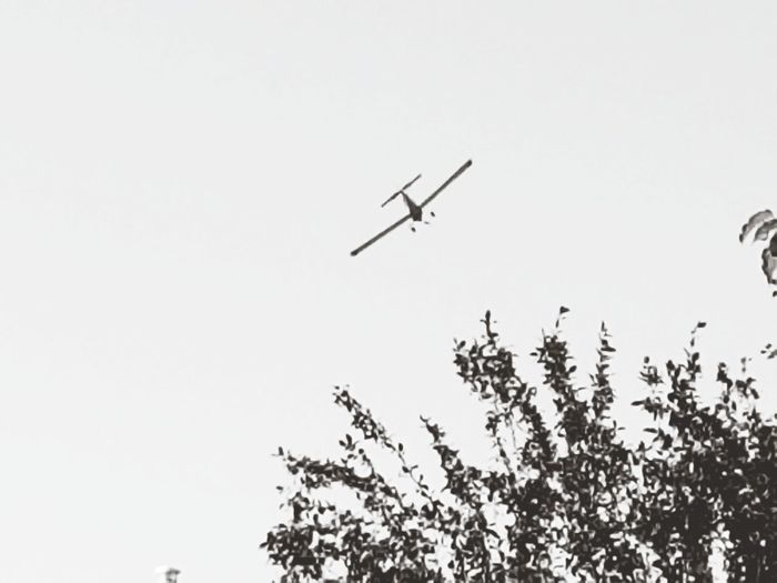 crop duster Blackandwhite No Animals Trees Alberta Crop  Dusters Airplane Early Morning Middleofnowhere View Flying Treetop Summer Working Fly Plane Farm Farmlife Flying Mid-air Air Vehicle Day Outdoors Sky Tree Clear Sky Nature Airplane No People