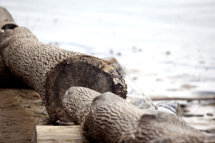 Alertness Brown Close-up Curiosity Detail Focus On Foreground Frozen Nami Island Natural Pattern No People One Animal Plank Relaxation Relaxing Riverside Rusty Selective Focus Surface Level Textured  Tree Trunk Winter Wood Wood - Material Wooden Zoology