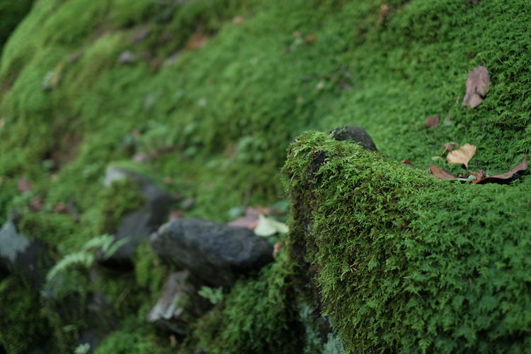 Close-Up Of Green Moss On Rocks