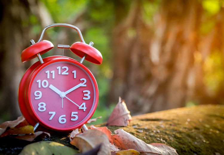 Red Alarm Clock Alarm Clock Clock Time Number Clock Face Accuracy Red No People Focus On Foreground Tree Day Nature Close-up Minute Hand Outdoors Wood - Material Communication Plant Part Leaf Hour Hand