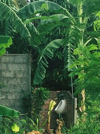 Rest Room Rest Room View Leaf Green Color Plant Growth The Portraitist - 2017 EyeEm Awards Nature Day Outdoors Agriculture Banana Tree Beauty In Nature Animals In The Wild Freshness Animal Themes Food Tree Close-up