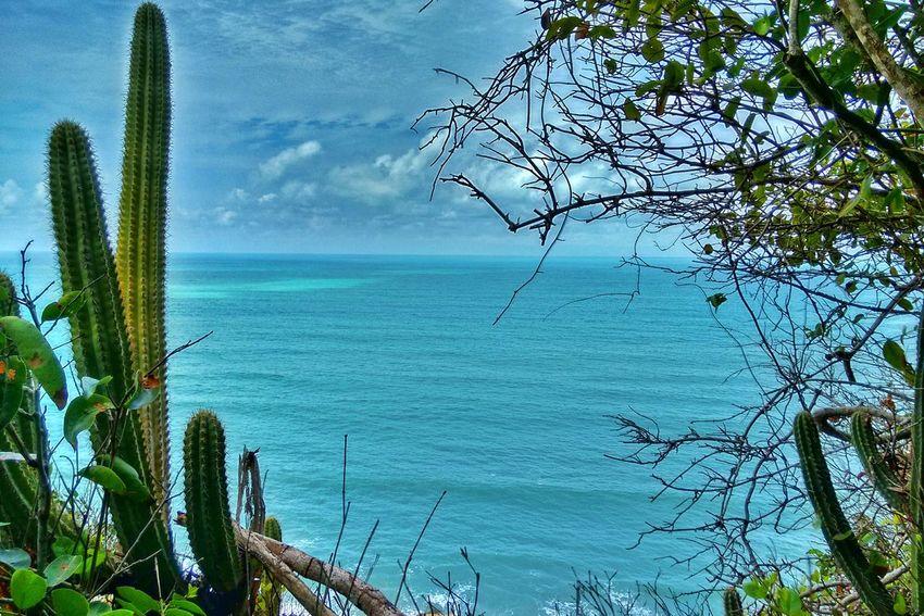 Feel The Journey Original Experiences Original Experience Praia Da Pipa