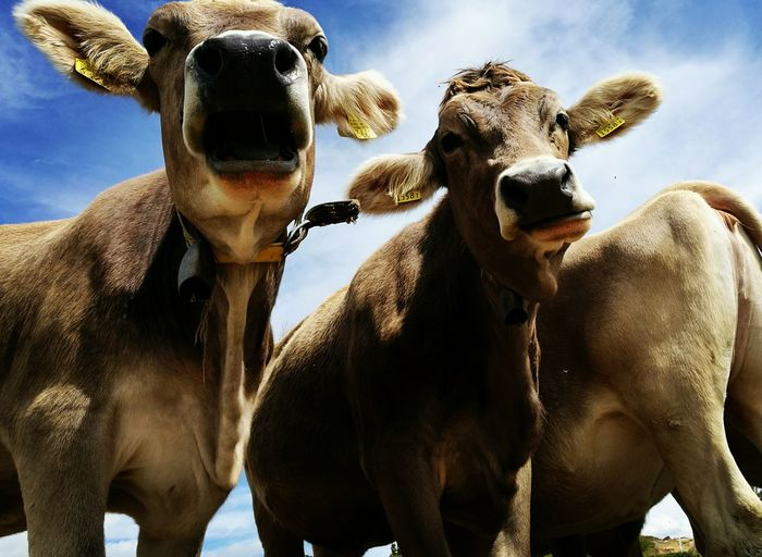 Low Angle View Of Cows Against Sky
