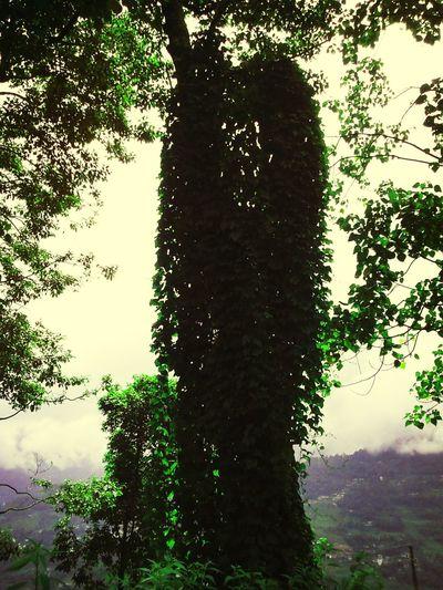 Elegance Everywhere Tree Kiss