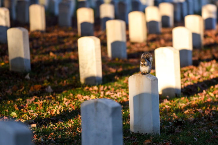 Squirrel sitting on tombstone in cemetery