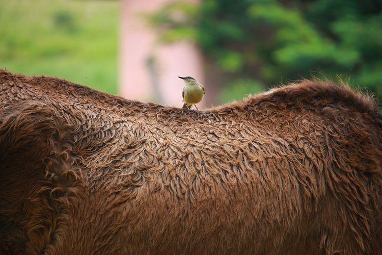 Bird perching on mammal