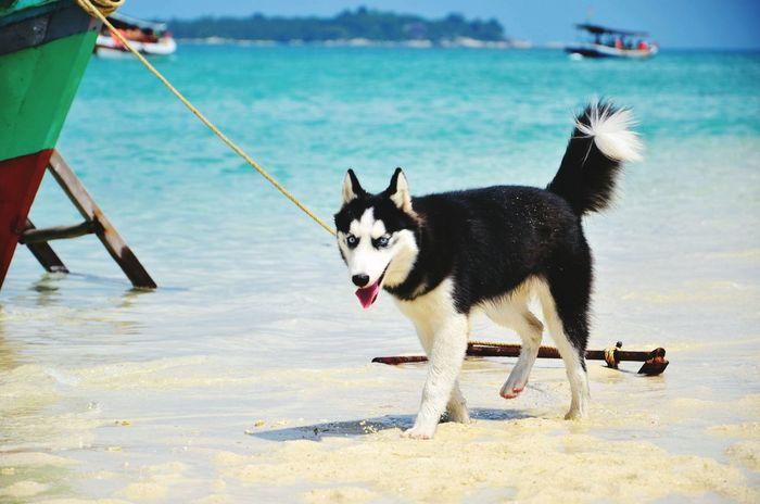 my dog in the island Life Is A Beach Beach Nature Beach Life Amazing On The Beach Popular Photos Summer Views Dog Dogs