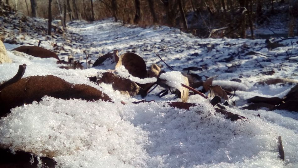 Snow ❄ Beautiful Nature Bieszczady Poland 💗 Zima Slonecznie Sylwester Liscie Pierwszyśnieg Perfect 👌