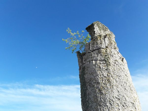 Solitude. Tree on the top of a Natural Column in Bulgaria near Varna in the Stone Forest. Sky Tall Cloud - Sky Tall - High Outdoors Column Bush Leaves Lea Green