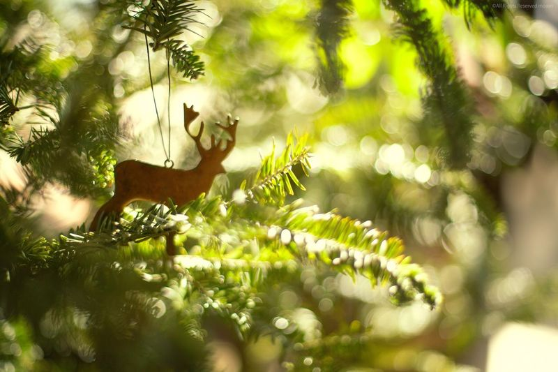 Close-Up Of Reindeer Decor Hanging On Christmas Tree