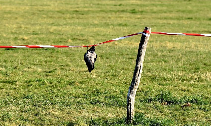 Horse hanging on a field