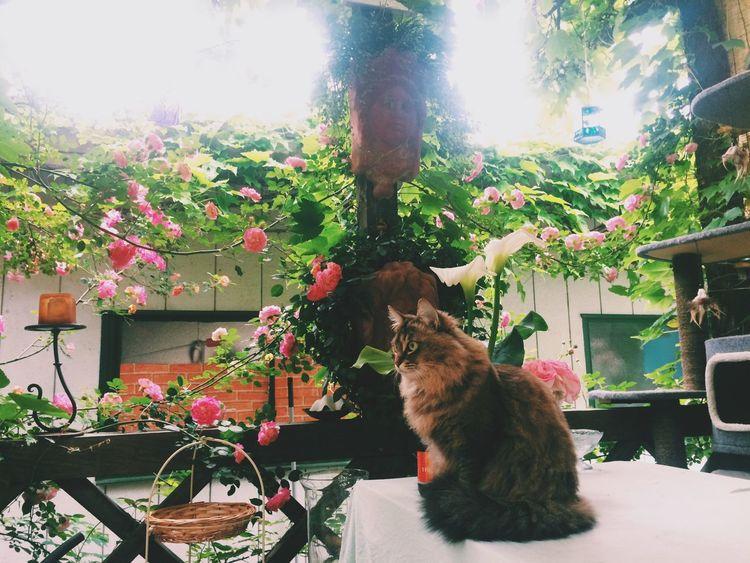 Cat Cats Meow Garden Flowers
