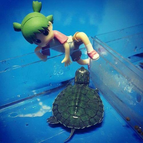 อะควาเรียมของน้องโยจัง Aquarium Yotsuba Turtle Mindturtle 🐢💕