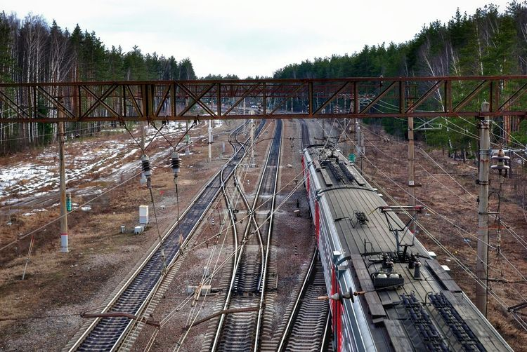 High Angle View Of RAILROAD Amongst Tall Pine Trees In Winter