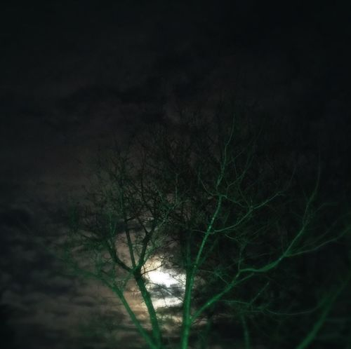 Nightphotography Night Photography Nightshot Green Moonlight Moon Moon Light Moon Shots Moon_collection Spooky Spooky Atmosphere Creepy Hauntedtree Haunted Trees Green Color Haunting  Moonshine Clouds Night Clouds Night View Moonporn Night Night Sky Moon And Clouds