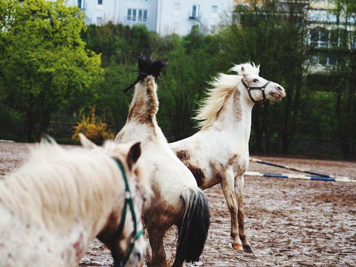 Horses on dirt at ranch