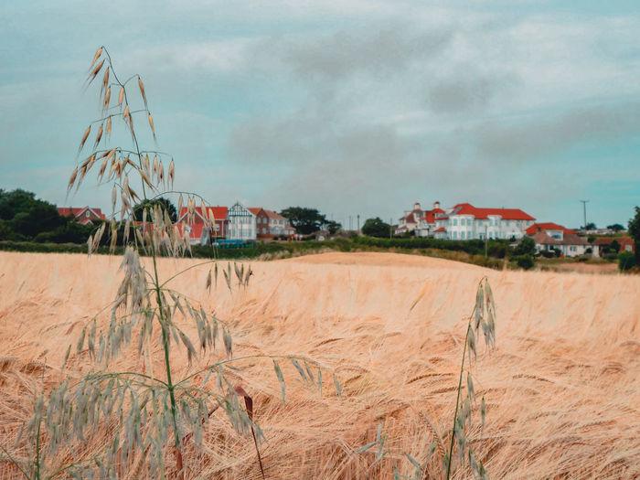 Plants on beach by houses against sky