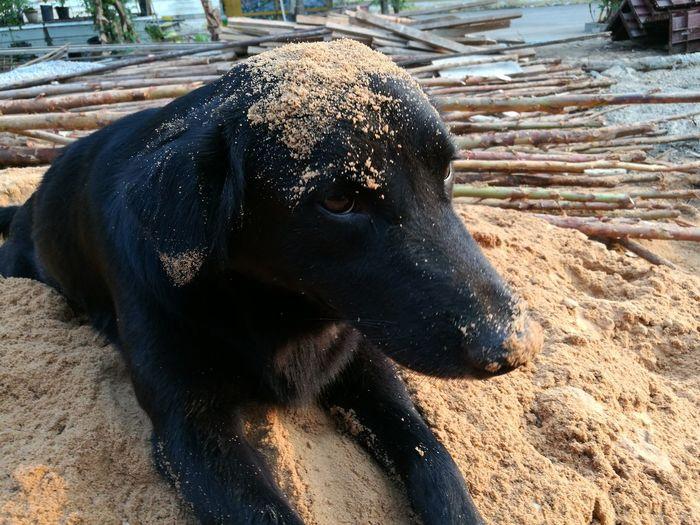 Soil Dog Black God Love Animals Love Dog Lovely Dog Outdoors No People One Animal Day Sand Close-up