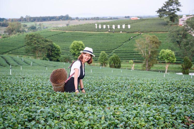 Girl in tea farm