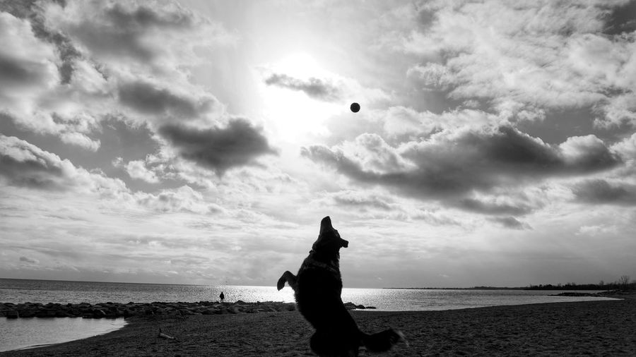 Sea Beach Outdoors Sunlight Cloud - Sky Water Dog Dogs Mansbestfriend Catch Playing Toronto Blackandwhite Amanandhisdog