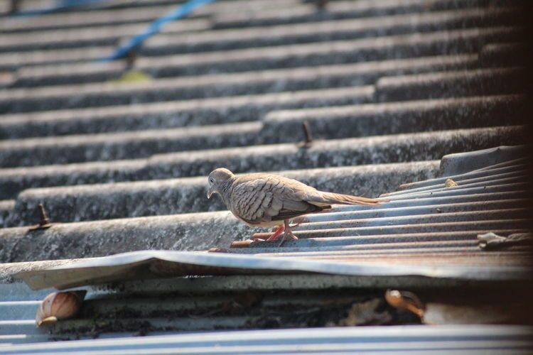 Close-up of birds perching on metal