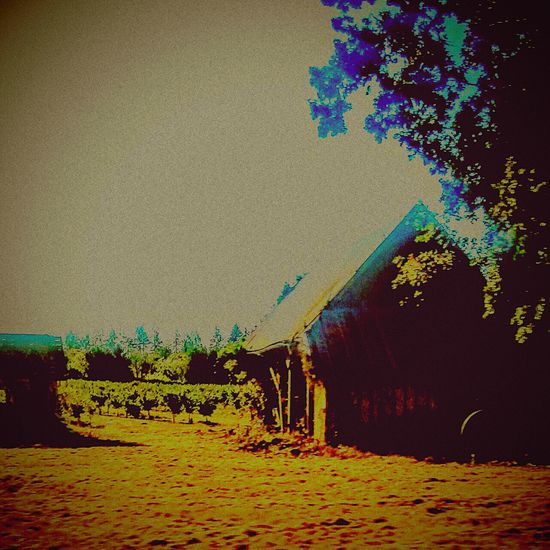 EyeEm Edits Enjoying Life Eyeemphotography Willamette Valley Oregonexplored Taking Photos Relaxing Lost In The Moment Nature_collection Drivebyphotography Oregonphotographer My Daily View I❤oregon Making Wine Little Cabin In The Woods Small Barn Old Barns Oregon Wine Grapes 🍇 Winolife In The Vineyard Barnstalker Farm Life Lost In Time Grapes Nature Photography