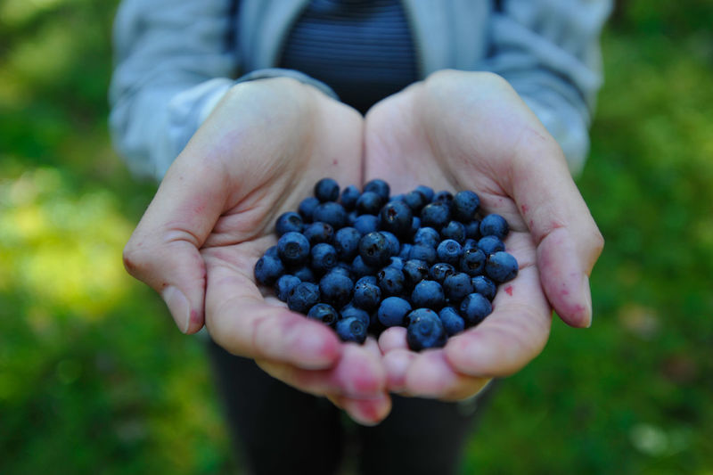 Close-up of hands holding blueberries