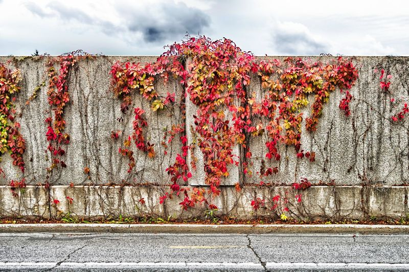 Autumn is coming ... Architecture Building Exterior Built Structure City Cloud - Sky Day Flower Flowering Plant Ivy Nature No People Outdoors Plant Red Road Sky Street Transportation Wall Wall - Building Feature