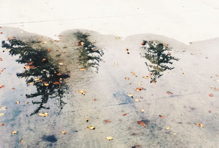 October/ EyeEm Best Shots The EyeEm Facebook Cover Challenge Fall Beauty Deceptively Simple