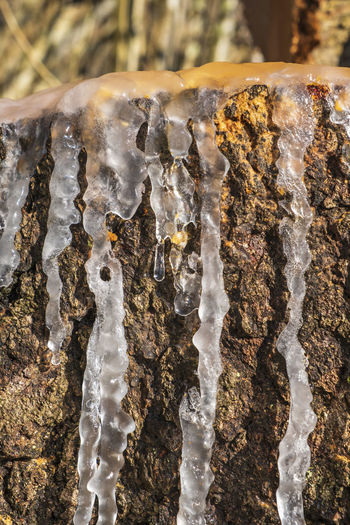 Close-up of icicles on rock