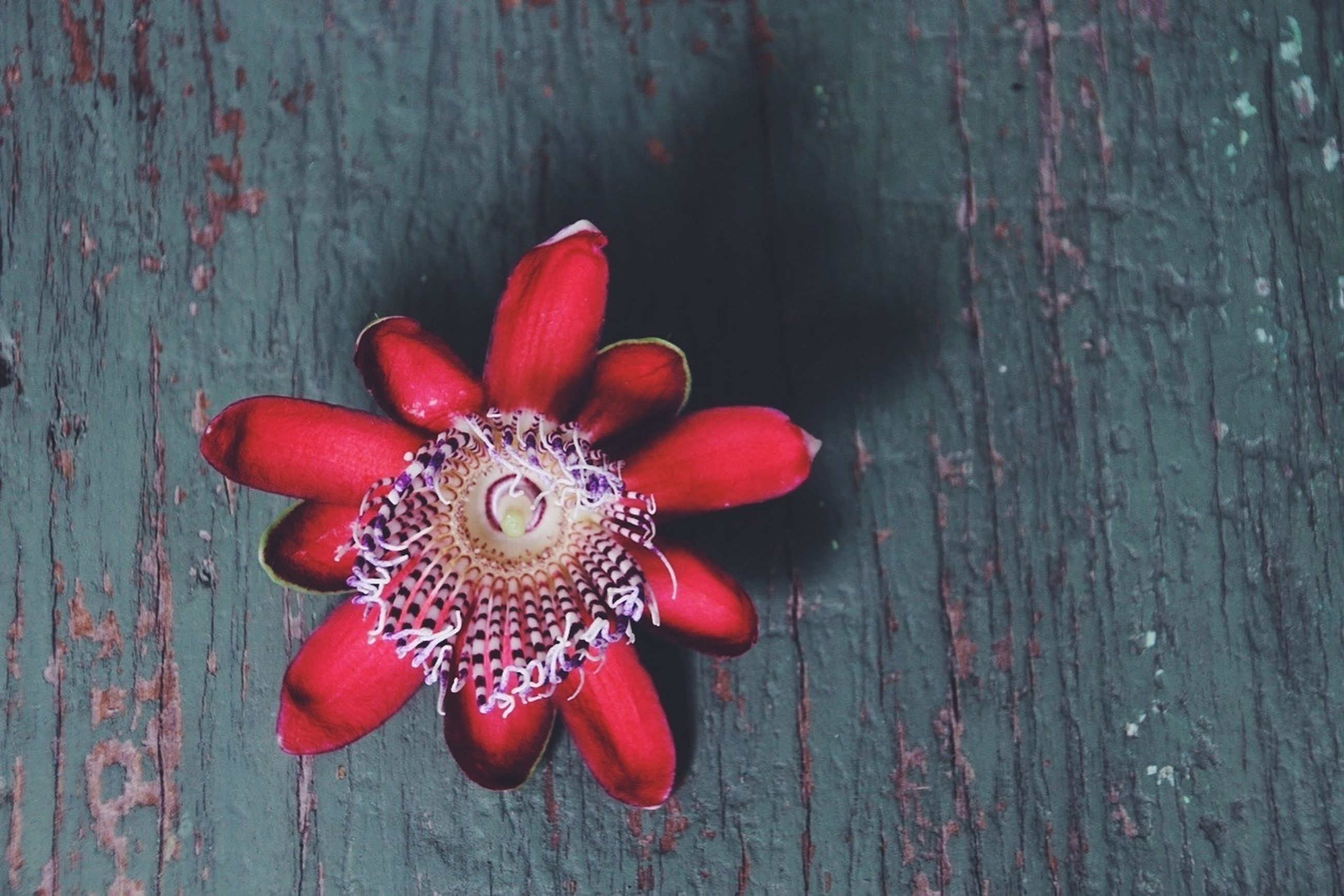 red, wood - material, wooden, flower, high angle view, freshness, close-up, wood, indoors, no people, table, petal, still life, fragility, plank, wall - building feature, day, vibrant color, multi colored, directly above
