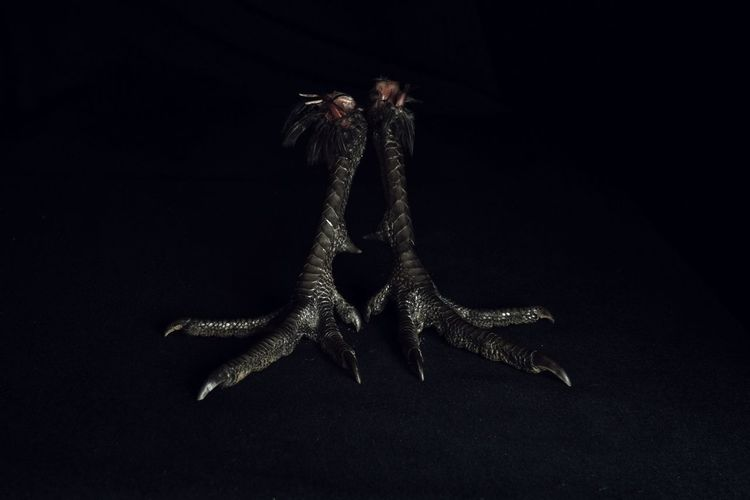 one of two.......03 Pheasant Pheasant Feet Claw Black Background Animal Animal Themes Black Darkness Close Up Chiaroscuro  Scales Texture Avian