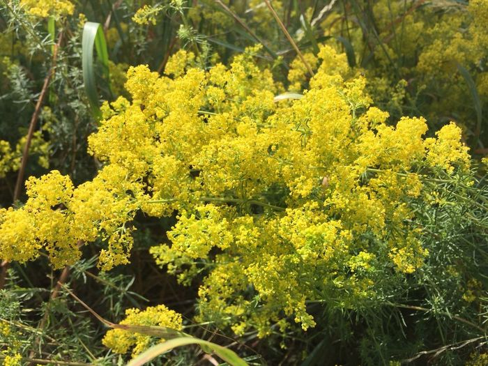 Yellow Plant Flower Growth Flowering Plant Beauty In Nature No People