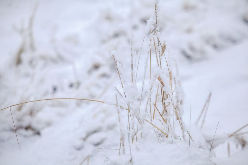 the nature it's sleeping... 😴❄😴❄ Close-up No People Winter Outdoors Backgrounds Day Nature Beauty In Nature My Picture 2017 Snow Winter Schnee Germany🇩🇪 First Eyeem Photo Have A Nice Day♥ Cold Temperature Nature Scenics Focus On Foreground Snowing Plant 400mm Lens Winter Landscape Snow Covered Wintertime
