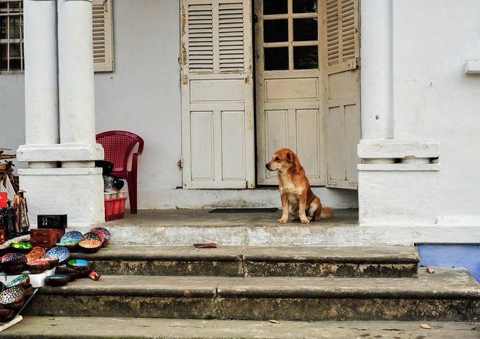 Waiting... EyeEm Best Shots Vietnam Dog Nikon Streetphotography Travel Photography