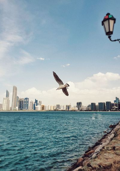 Seagull flying over sea in city
