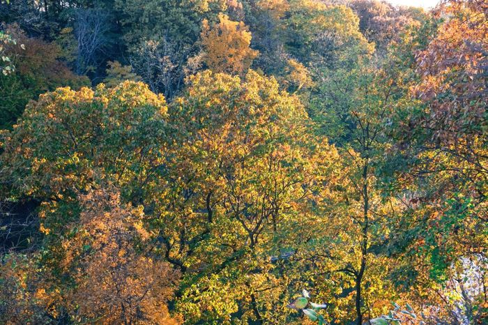 Trees Autumn Nature Autmn Colors Growth No People Nature Beauty In Nature Multi Colored Outdoors Day