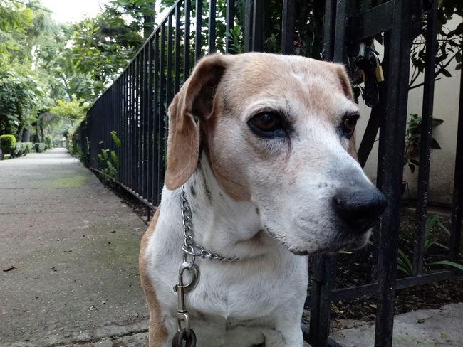 EyeEm Selects One Animal Domestic Animals Dog Pets First Eyeem Photo