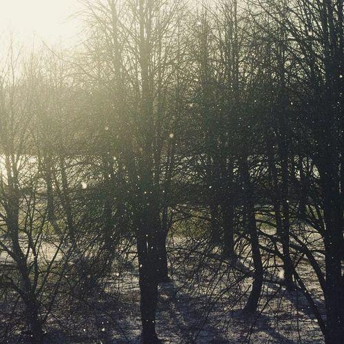 A Bit  Of Snow 😌