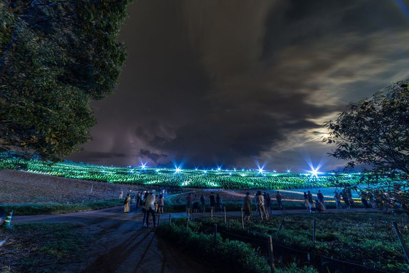 Night Crowd Illuminated Group Of People Lighting Equipment Arts Culture And Entertainment Large Group Of People Light Music Light - Natural Phenomenon Real People Celebration Plant Event Tree Sky Nature Cloud - Sky Outdoors Architecture