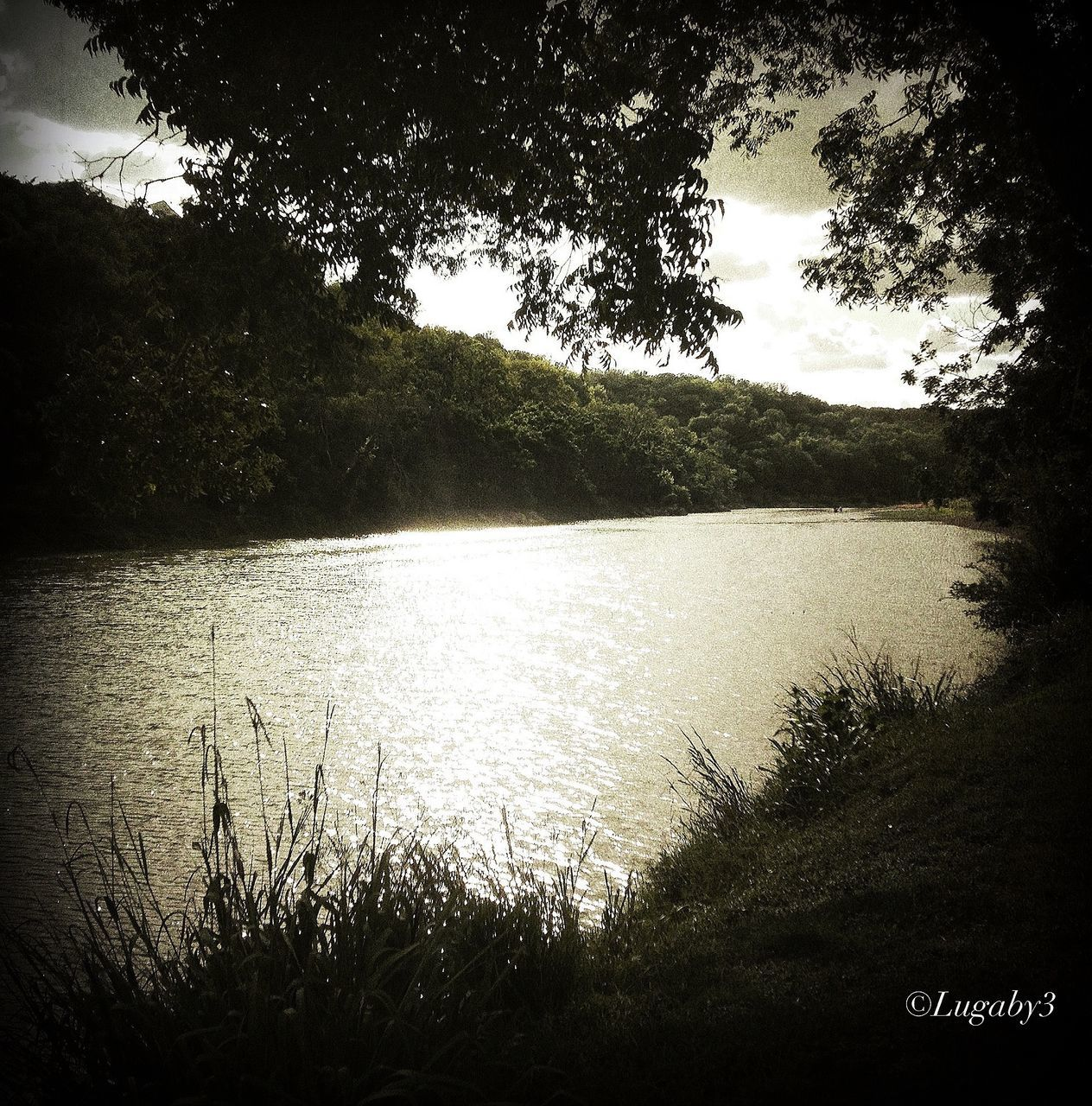tree, water, lake, tranquility, nature, tranquil scene, scenics, no people, outdoors, growth, beauty in nature, day, sky, vacations, grass