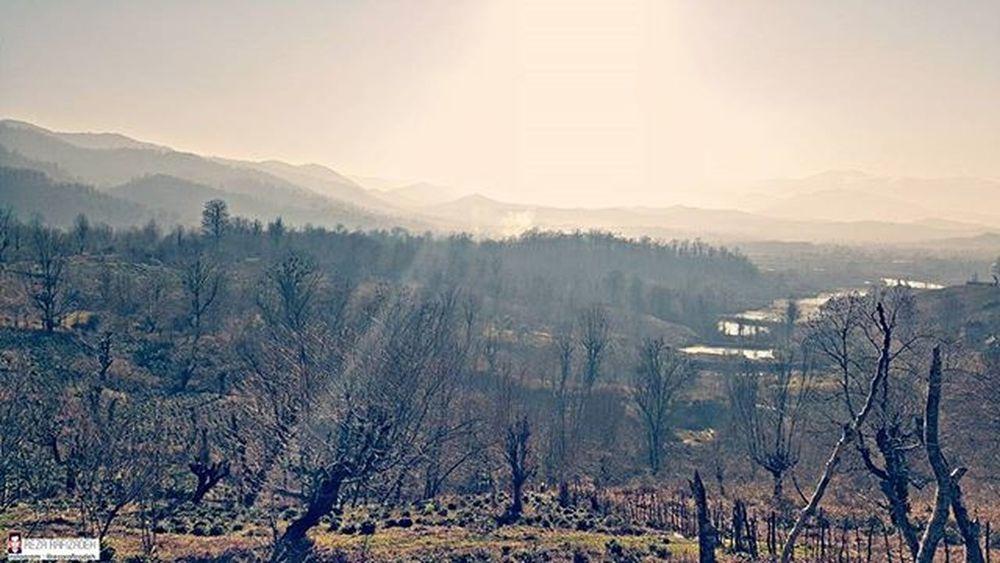 Nature Mountains Trees Forest Sunny Sunshine Winter Iran Gilan Rasht