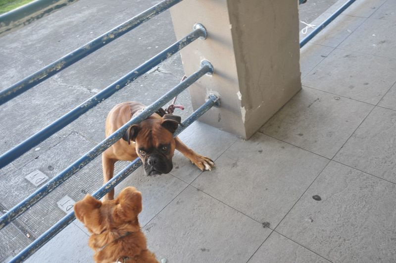 High angle view of dog